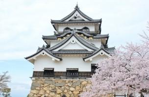 桜と一緒に移る彦根城